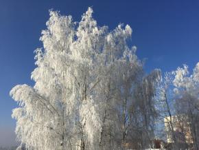 ALF naboso v zimě #6